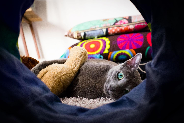 Kissa_tunnelin_paassa