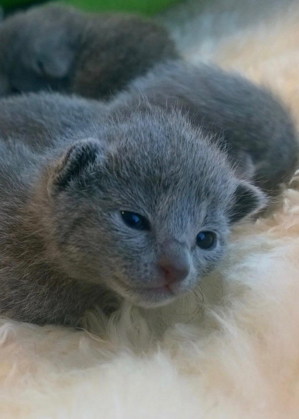 vastasyntyneillä siniset silmät
